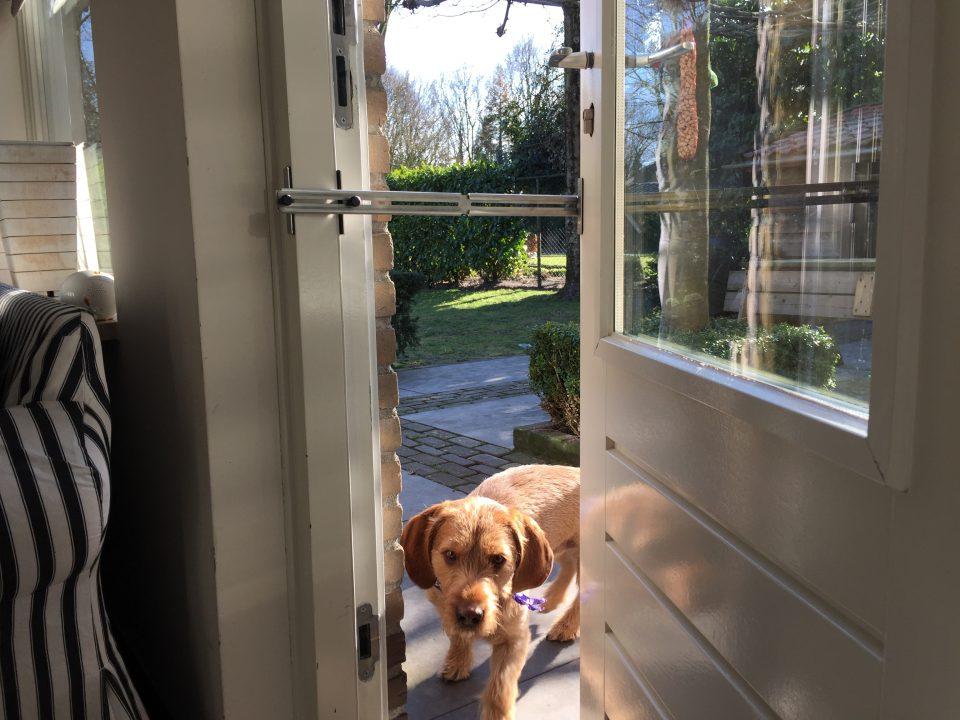 Kierr Classic 200 a doorstop for pets
