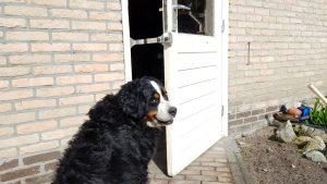 Kierr Flex 200 zonder boren en schroeven deuruitzetter waarmee je honden kunt binnenlaten.