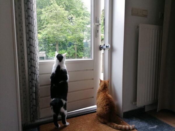 Kierr Flex 100 eindstellbar türstopper zu Katzen drinnen halten